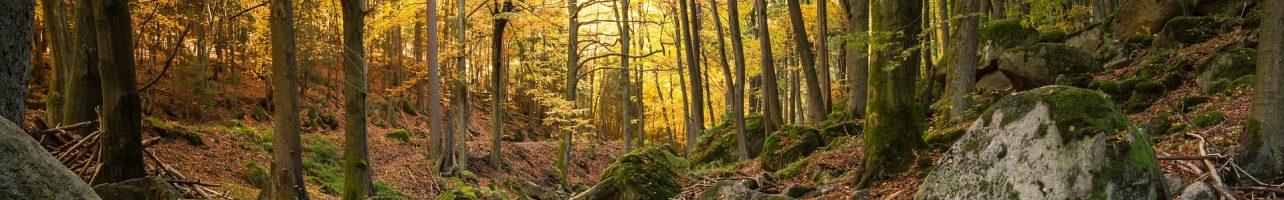Der Harzer Hexenstieg