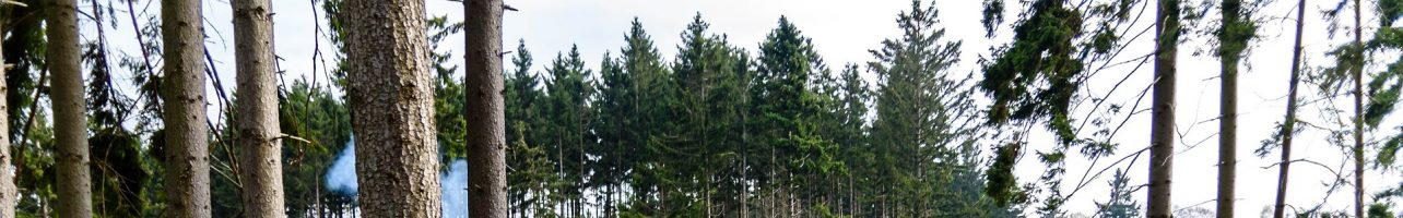 5 magische Orte im Harz