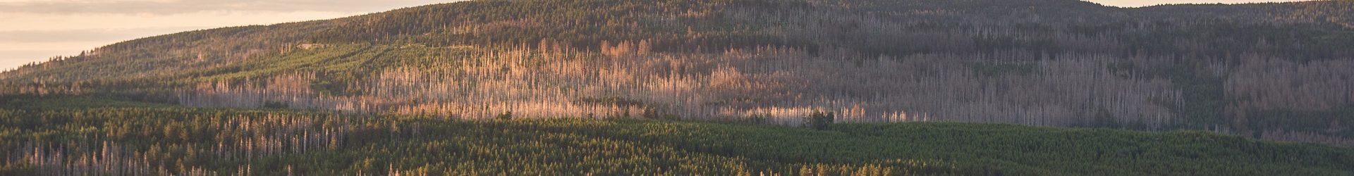 Harzausflug: Wanderung zu den Rabenklippen